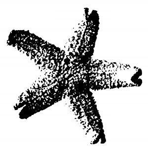 starfish_LINEART